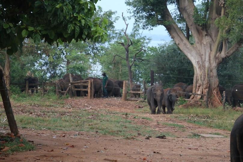 Udawalawe_ElephantTransitHome_1