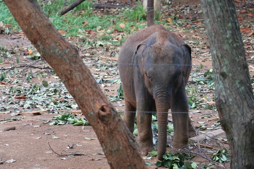 Udawalawe_ElephantTransitHome_2