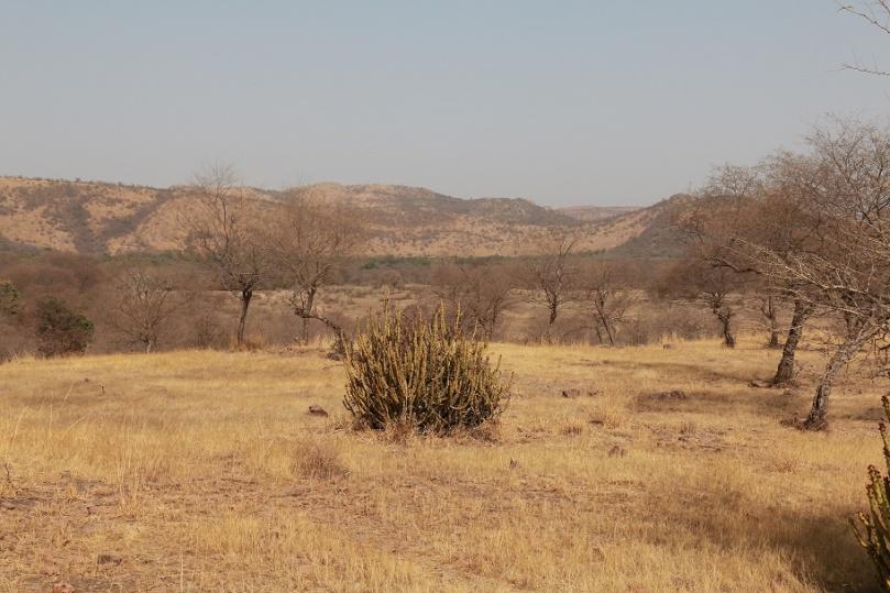 Eine_Safari_im_Ranthambore_Nationalpark_8_thebraidedgirl