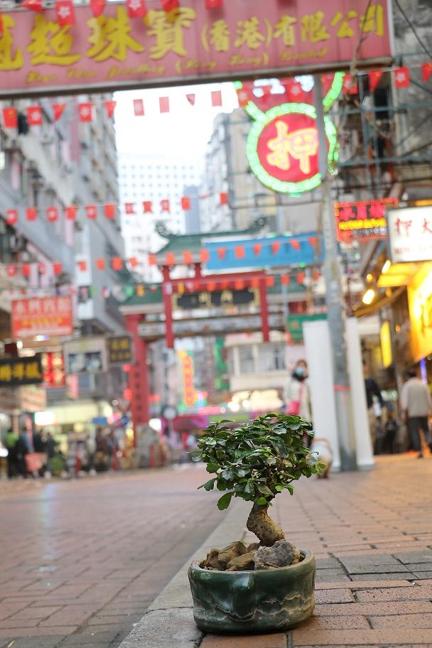 Hong_Kong_Temple_Street_Market_3_thebraidedgirl