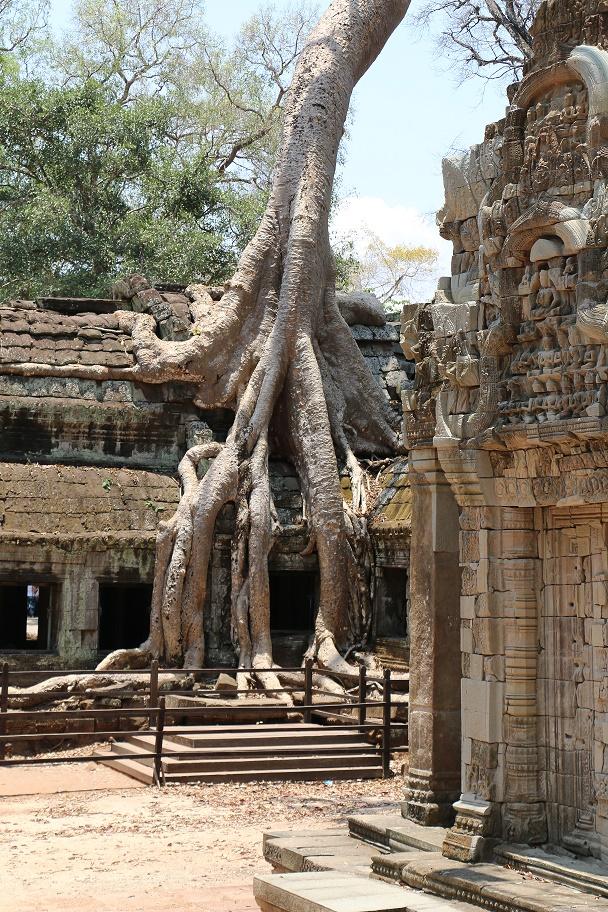 Angkor_Ta_Prohm_2_thebraidedgirl