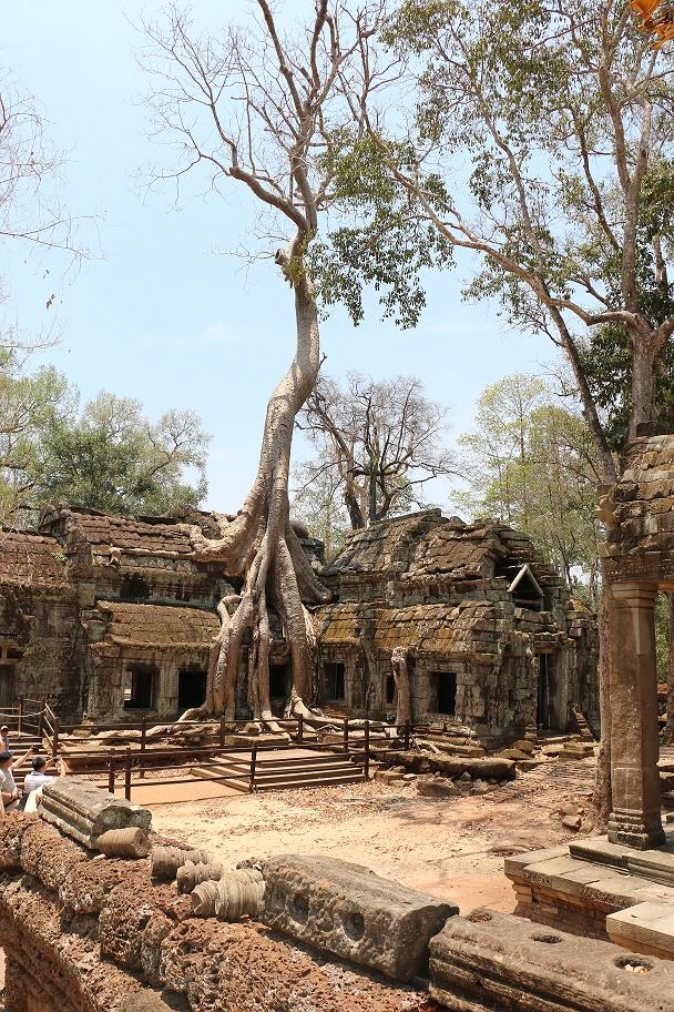 Angkor_Ta_Prohm_3_thebraidedgirl
