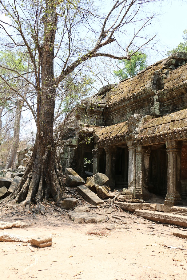 Angkor_Ta_Prohm_6_thebraidedgirl
