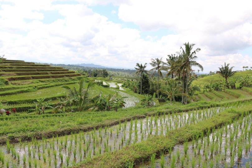 Jatiluwih-Reisterrassen-Bali-thebraidedgirl-8